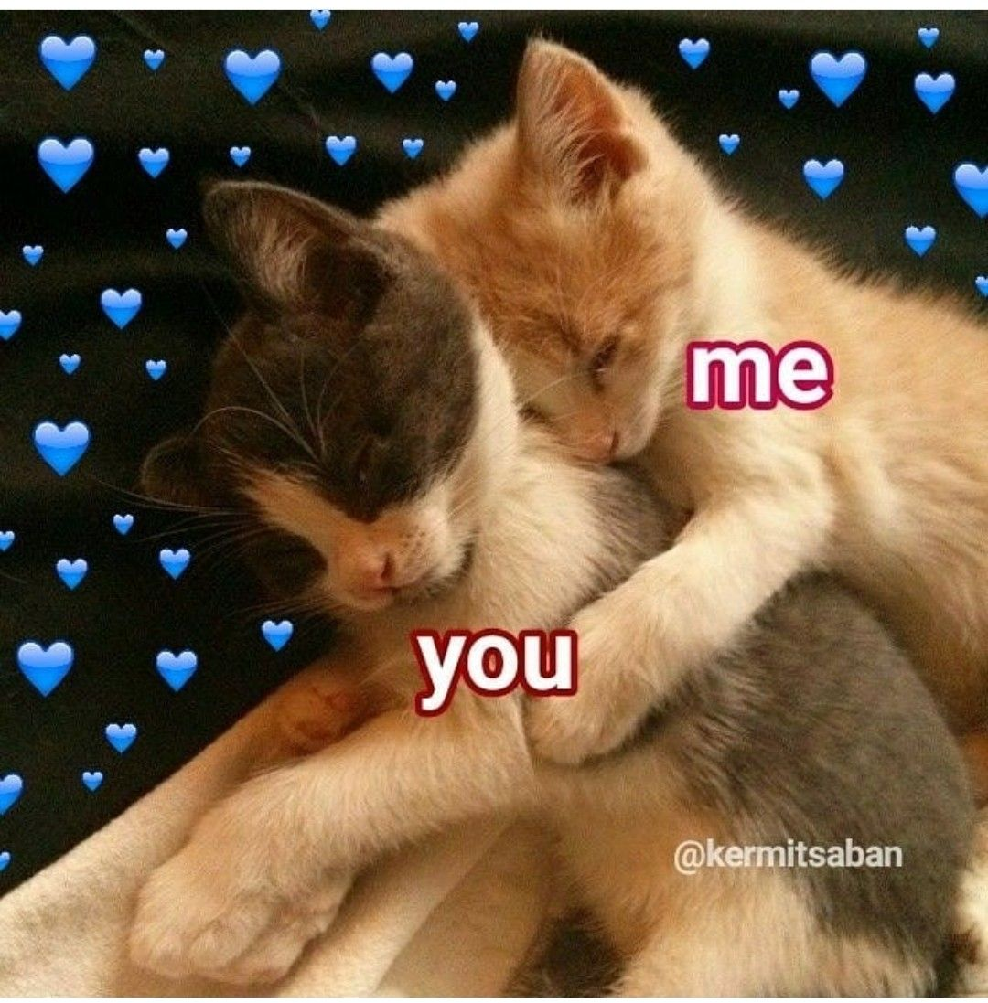 Post For Crush Cute Cat Memes Cute Love Memes Cute Baby Cats
