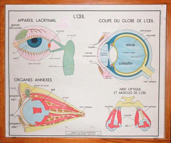 cours d anatomie du corps humain pdf