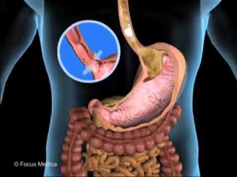 Atlas Infantil Animado de Anatomia - Sistema Digestivo y Excretor ...