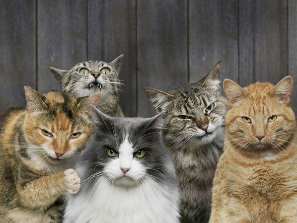 Nämä ovat todelliset kissanpäivät - ihanat kissat kuvissa