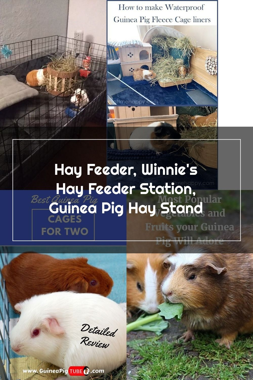 Pin Sa Guinea Pig Toys