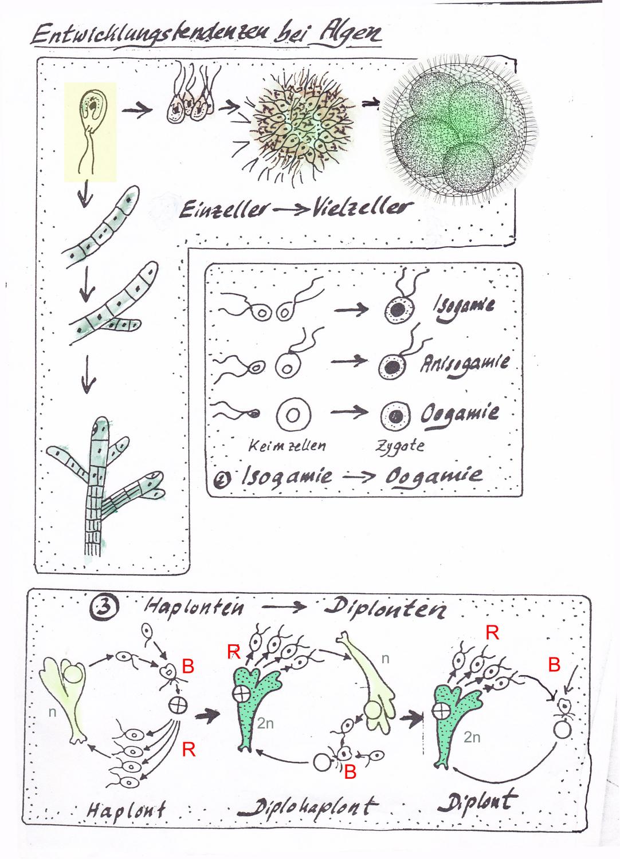 Biologische Evolution Vom Einzeller Zum Vielzeller 0