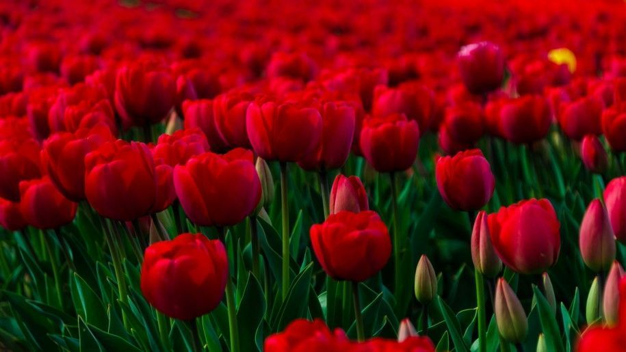 Beautiful Flowers Wallpapers For Desktop Background 1680