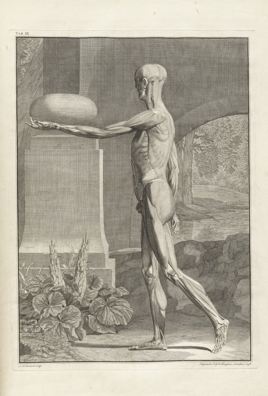 Albinus, Bernhard Seigfried (1697-1770), Tabulae sceleti et ...
