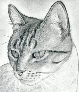 how to draw a cat head draw a realistic cat step 10 dragoart