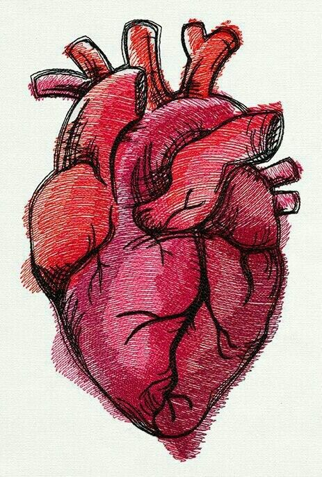 real heart | drawings | pinterest | drawings, sketches and drawing, Muscles