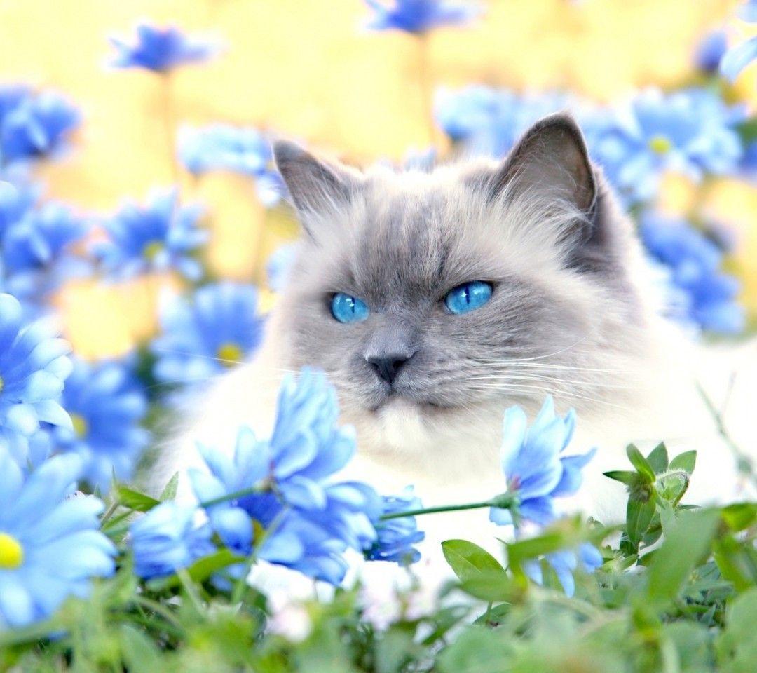 cat L'OJOS AZULES Hledat Googlem Zvířata, Pes, Oči