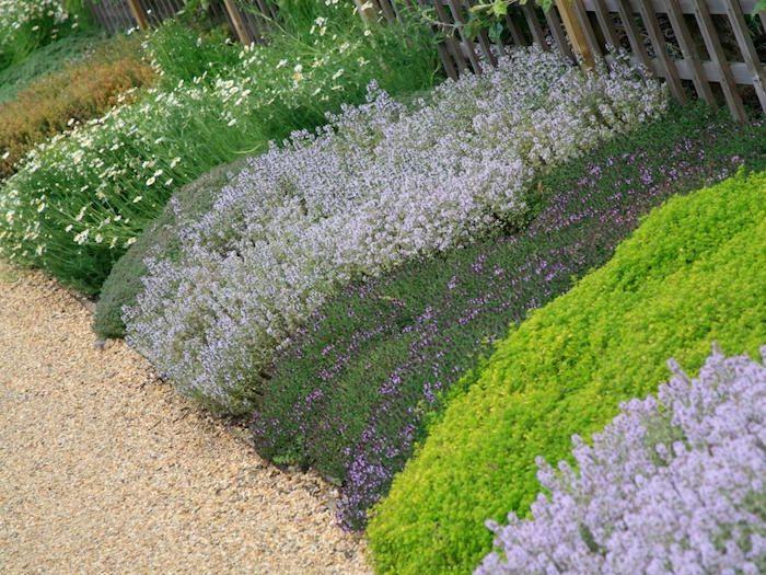 Plante couvre sol un tableau de couleurs naturelles dans votre jardin plantes - Plante couvre sol sans entretien ...