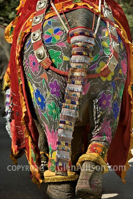 India, Rajasthan, Jaipur, Painted Elephant Festival, rear view