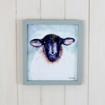 Basil Sheep Picture
