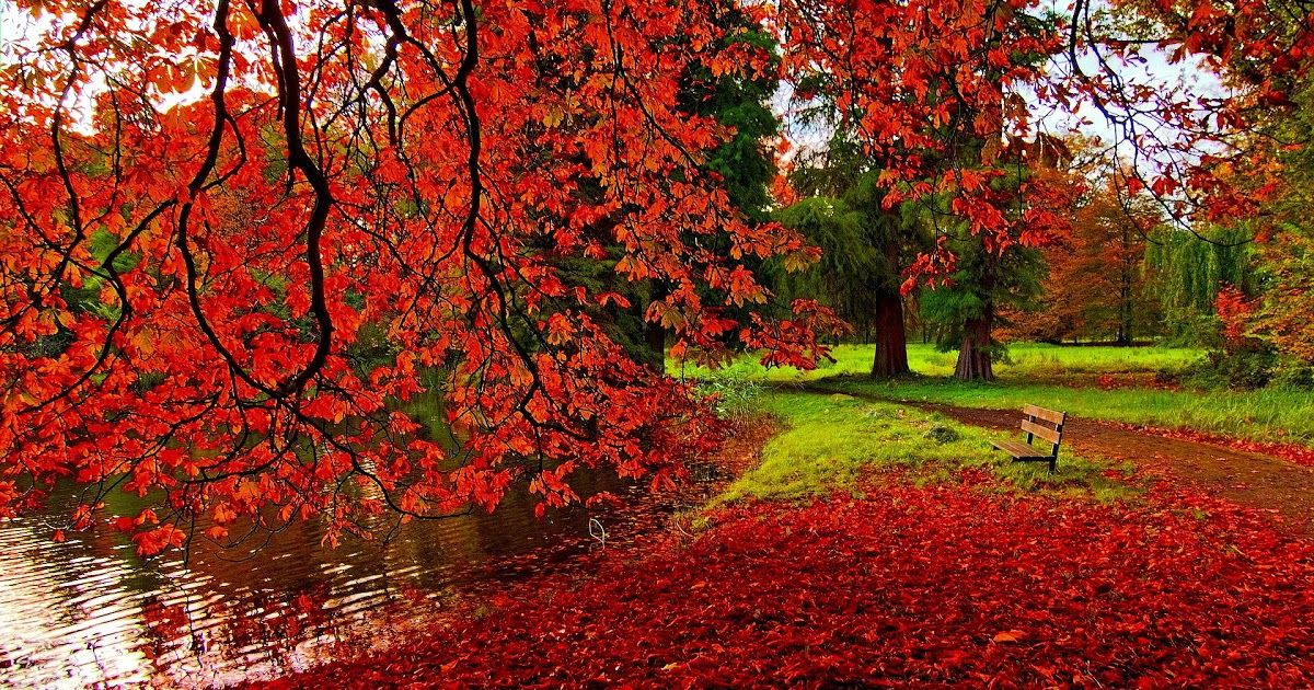 13 Autumn Desktop Background Hd Romantic Autumn Hd Desktop Wallpaper Romantic Nature In 2020 Desktop Wallpaper Fall Fall Desktop Backgrounds Screen Savers Wallpapers