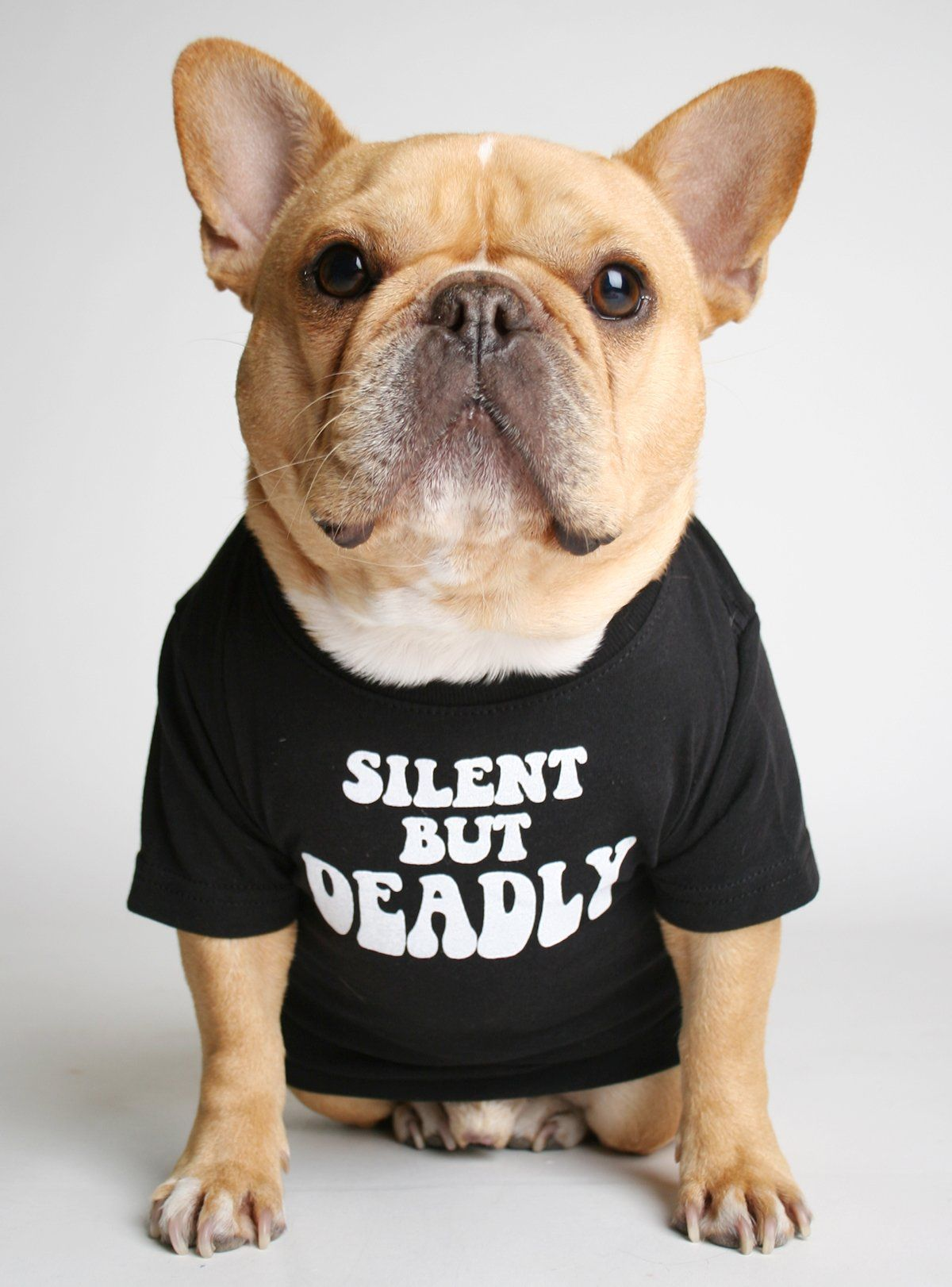 Silent But Deadly Dog Tee Dogs Tee French Bulldog Puppies