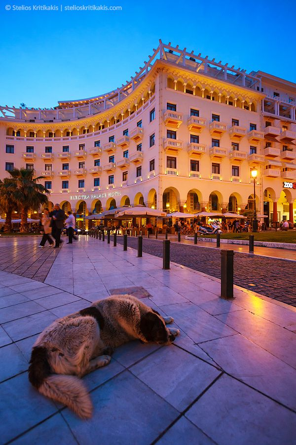 Aristotelous Square, Thessaloniki, !  There's not one day where I don't see a stray dog in the streets of Greece...typical !