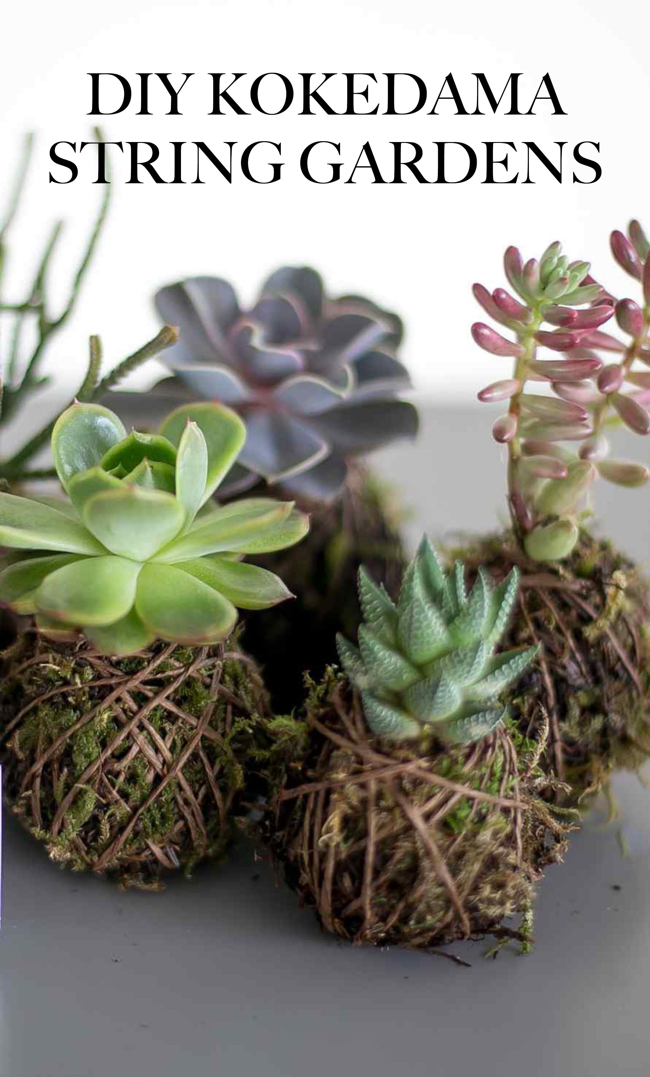 les 25 meilleures id es de la cat gorie plantas japonesas sur pinterest int rieur moderne. Black Bedroom Furniture Sets. Home Design Ideas