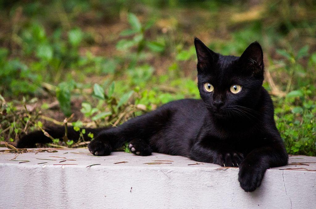take a rest les chats nadine barczyk pinterest chat chaton et noir. Black Bedroom Furniture Sets. Home Design Ideas