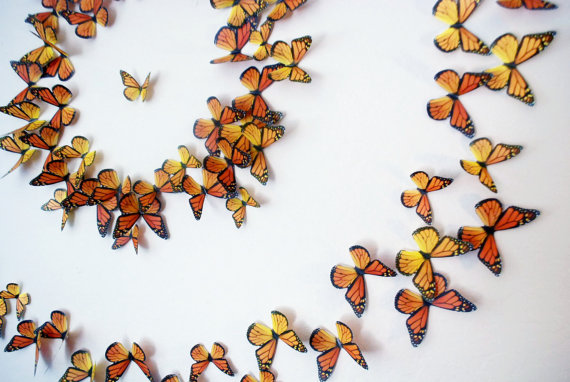 Love Monarchs Plant Milkweed Small For Big 3d Wall Art 3d Butterfly Wall Art Butterfly Wall Art