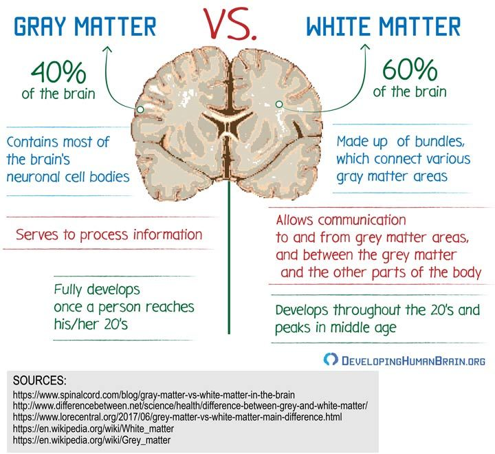 This picture describes how grey and white matter has a ...