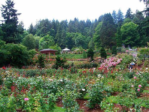 The Rose Garden   Gardens   Pinterest   Portland oregon, Rose garden ...