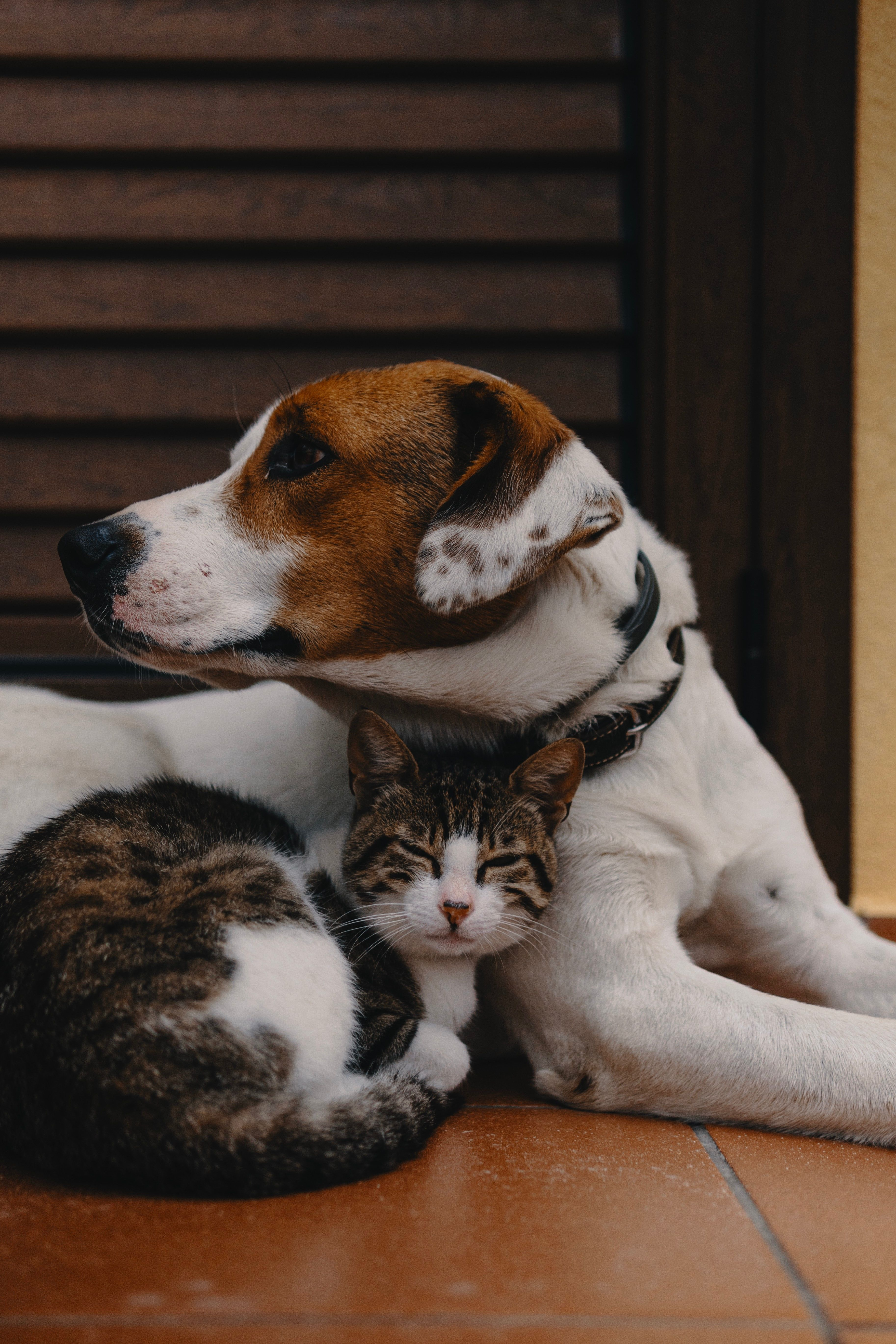 Dogs Pets Cats Petslover Spoiledpets Petslife Petsarefamily Bff Puppy Breeds Cat Care Cat Pics