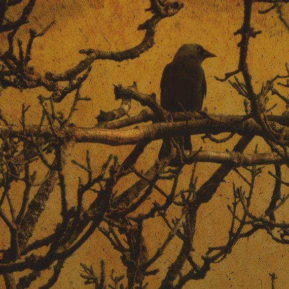 black crow halloween crow photograph gothic decor gold crow photo - Halloween Crows
