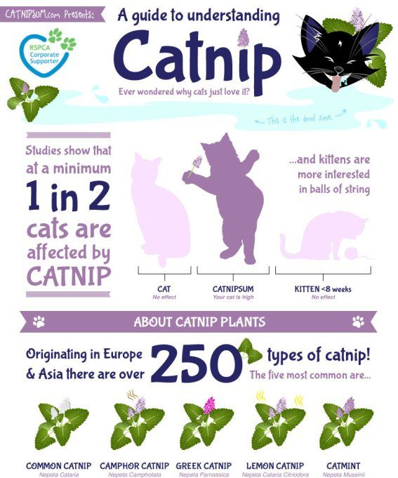 Catnip Effect Cats Cat Infographic Catnip Cat Quotes Funny