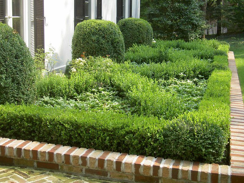 How To Plant Boxwoods In 2021 Hedges Landscaping Boxwood Landscaping Boxwood Hedge