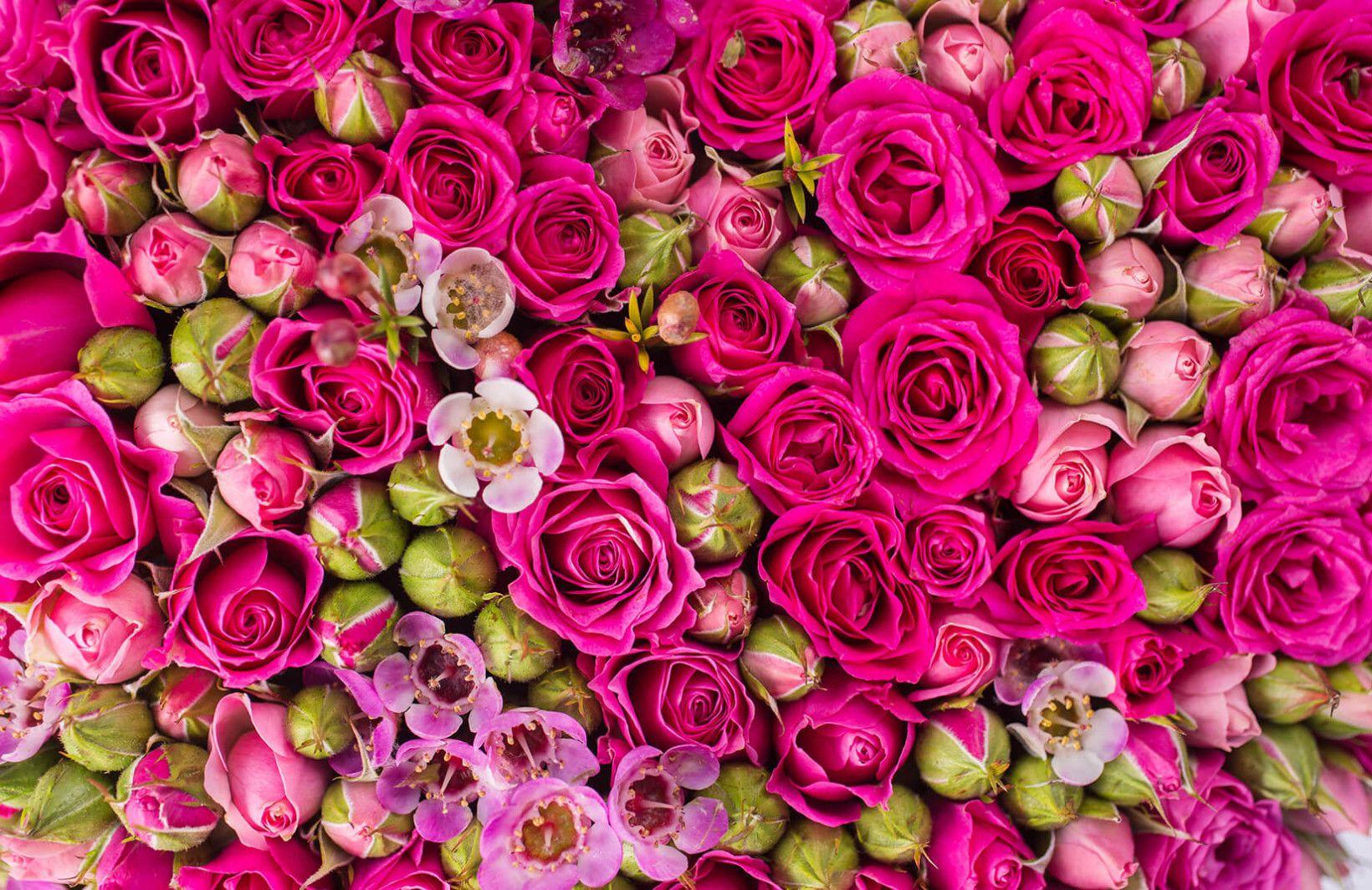 Packed Roses Wallpaper Mural Flower meanings, Flower