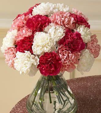 Carnations Carnation Flower Flower Arrangements Most Beautiful Flowers