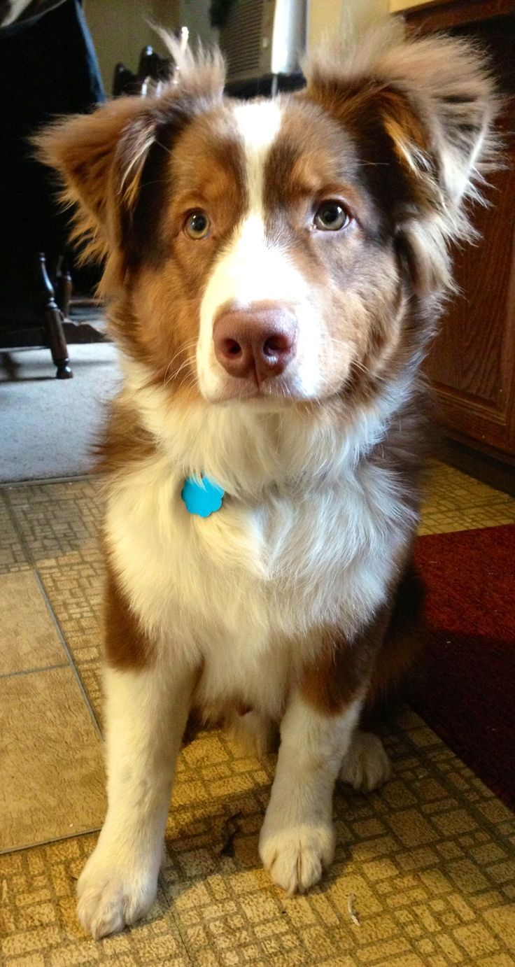 50 pounds of handsome Healthiest dog breeds, Cute