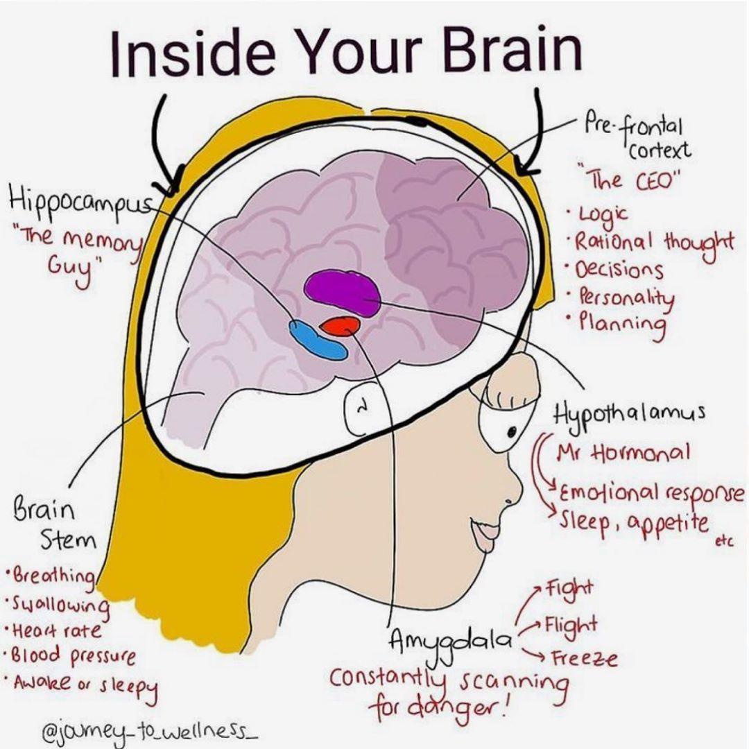 Pin On Brain Presentation