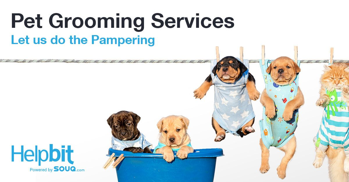 Pamper Your Pet With Pet Grooming Services At Your Home Helpbit Pet Grooming Pets Pet Care