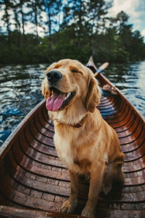 Pinterest Whysoperfectt Happy Dogs Cute Animals Dogs