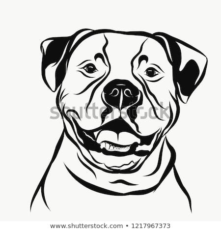 Funny american bulldog portrait Bulldog art, American