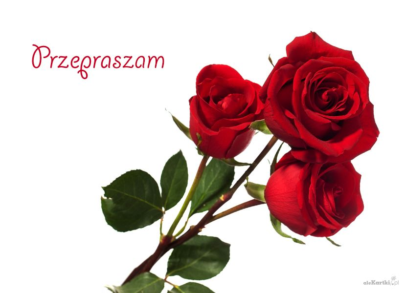 Pin By Wanda Swoboda On Przeprosiny Plants Flowers Rose