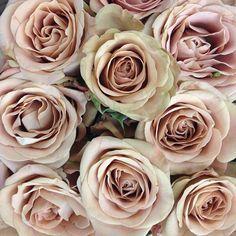 Cappuccino colored roses!#idie #beautiful #rose #nofilter #lavendersflowerindex
