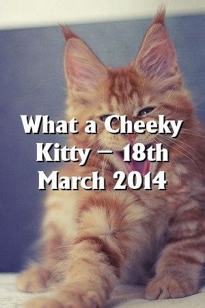 Abigail Ross Tells About What a Cheeky Kitty – 18th March 2014   #catbreeders  #kitty  #catoftheday  #animals  #Adult  #Choose  #Cats  #Colors