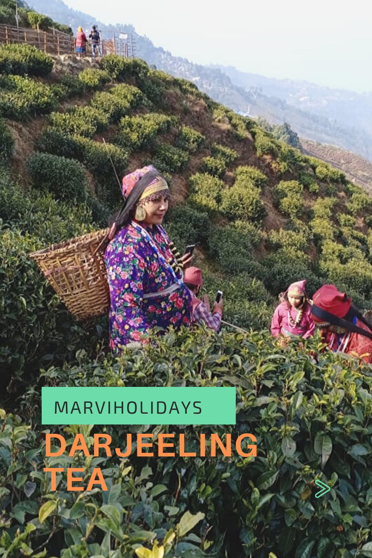 8b880880fe91cf417f858669a258ca1e - List Of Tea Gardens In Darjeeling