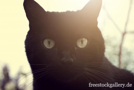 Schwarzer Katze Kazenbild Katzen Tiere Tierbilder
