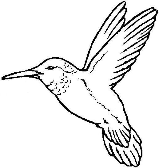 Resultado De Imagen Para Dibujos De Aves