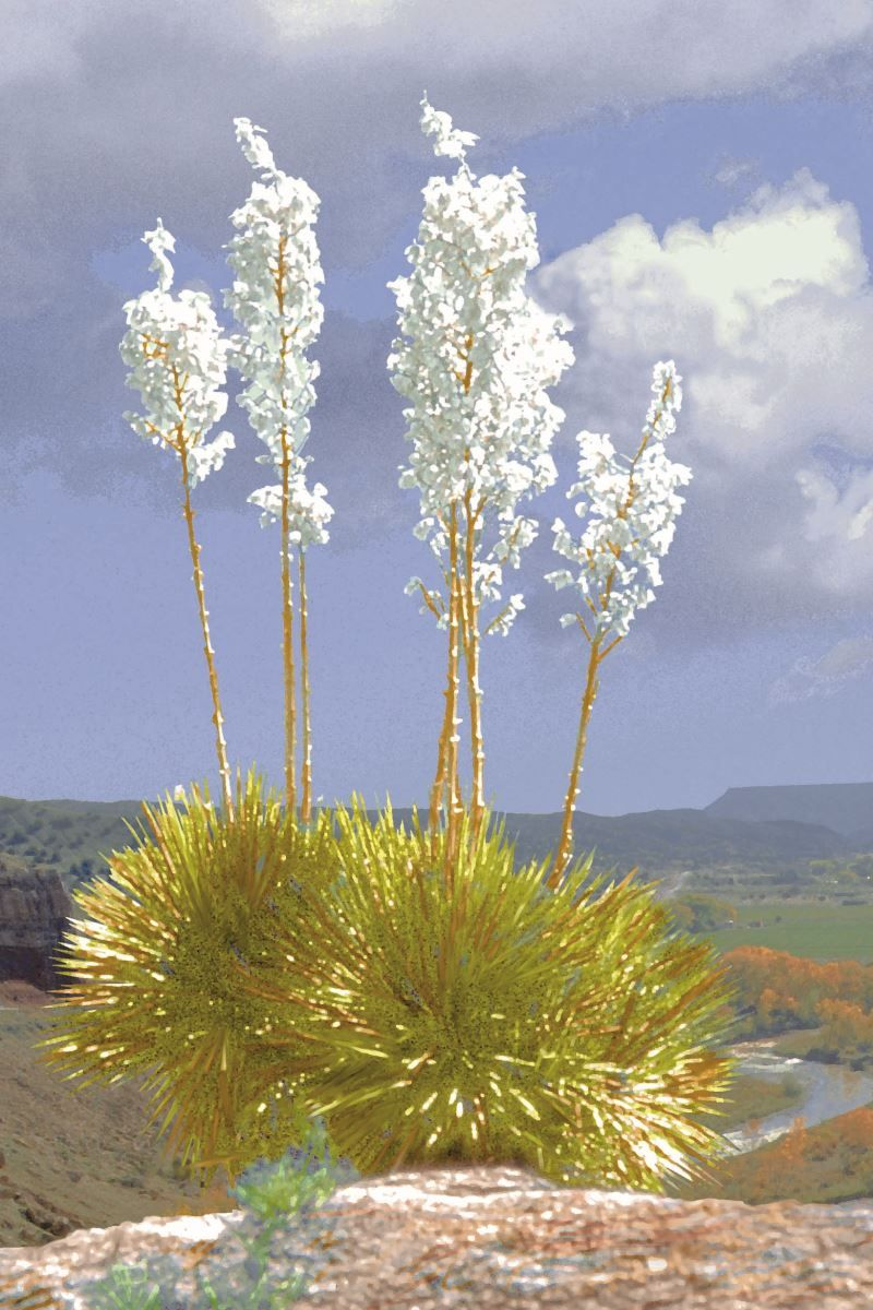 The New Mexico state flower is the Yucca. Travel new