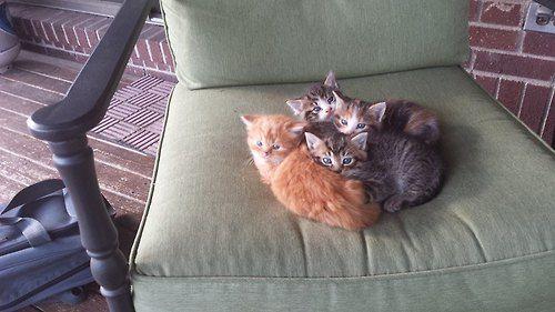 Cute kitties!