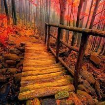fall colors..