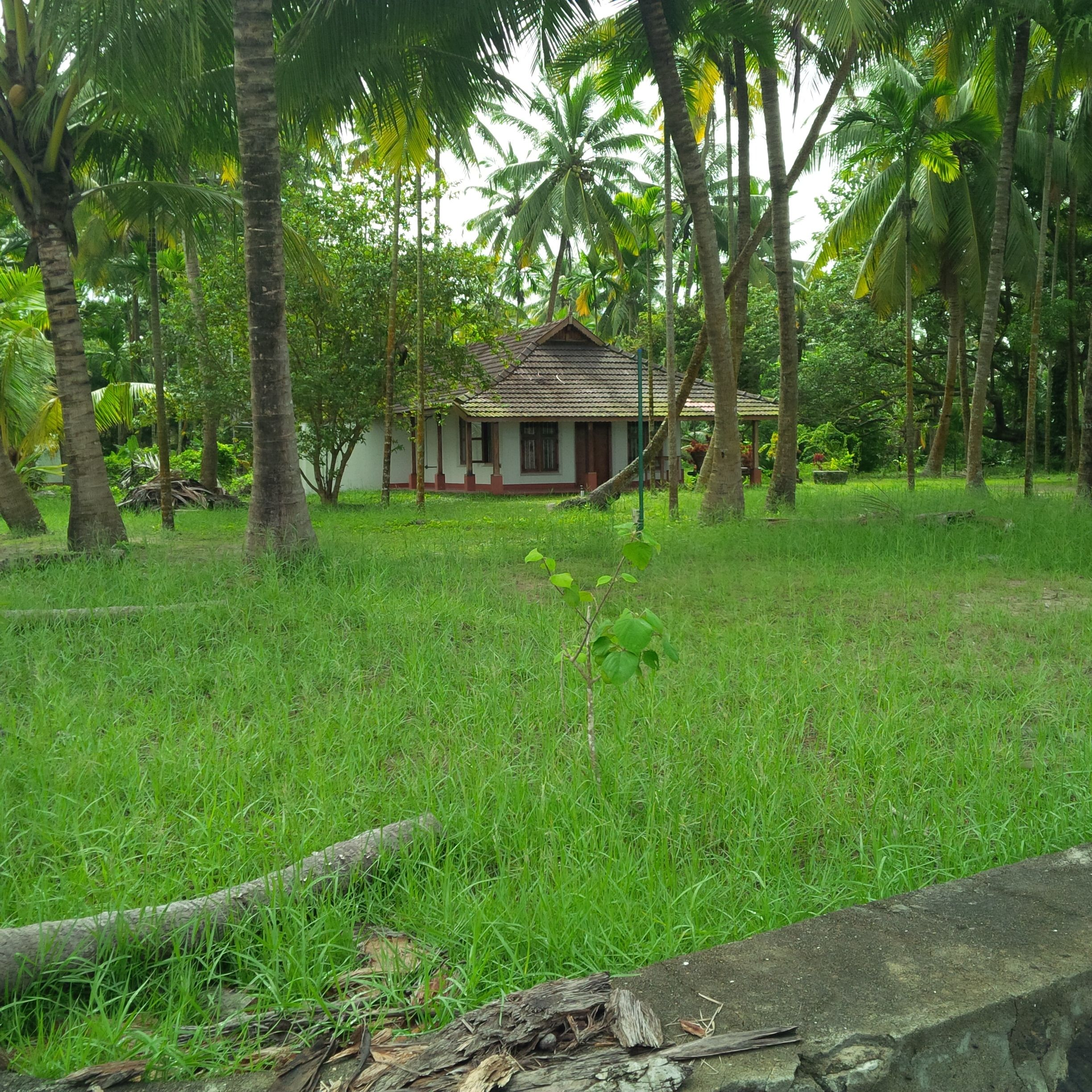Kerala Backwater With Kovalam Beach Customised India Tour Packages By Delhi Tour Operator Natural Homes Natural Home Decor Village House Design