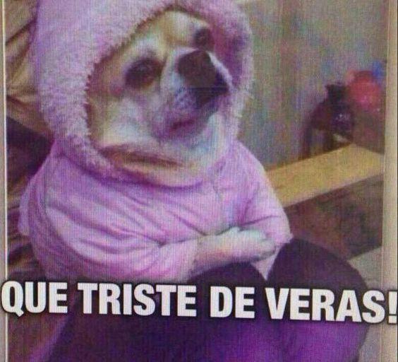 Perro Chihuahua Meme S Mega Memeces Memes Chistosisimos Imagenes Divertidas Chistoso