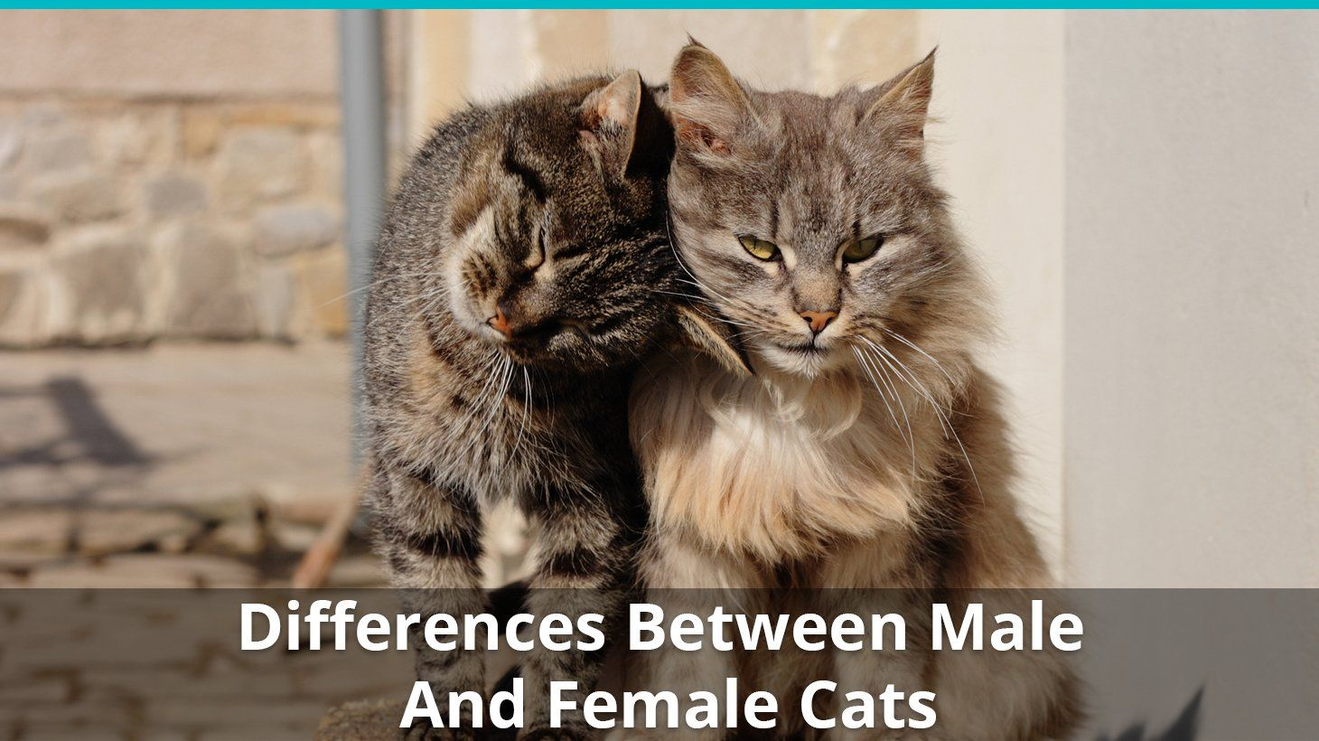 The Most Obvious Difference Between Male And Female Cats Is Their Gender They Are Poles Apart In Terms Of Reproductive Organs And Obviously In 2020 Cats Cat Lady Male