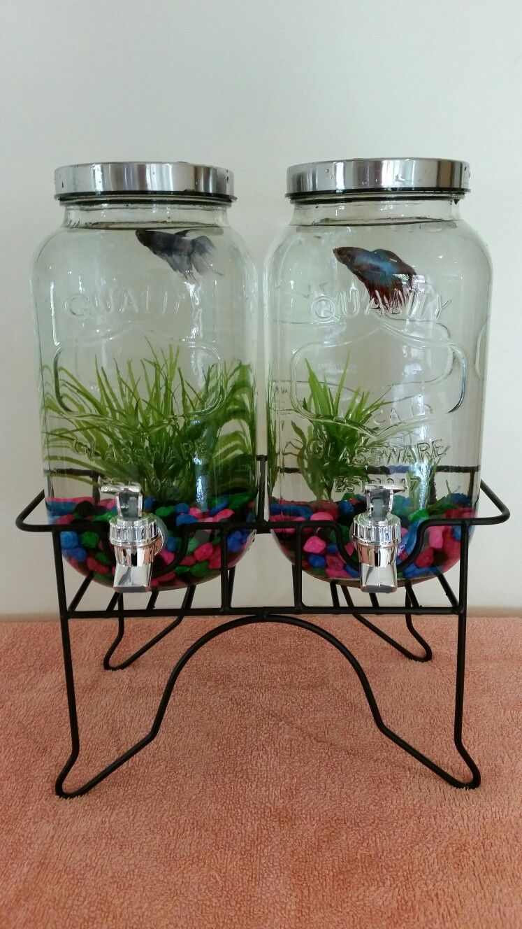 Diy drink dispenserfish tank could be converted for aquaponics to