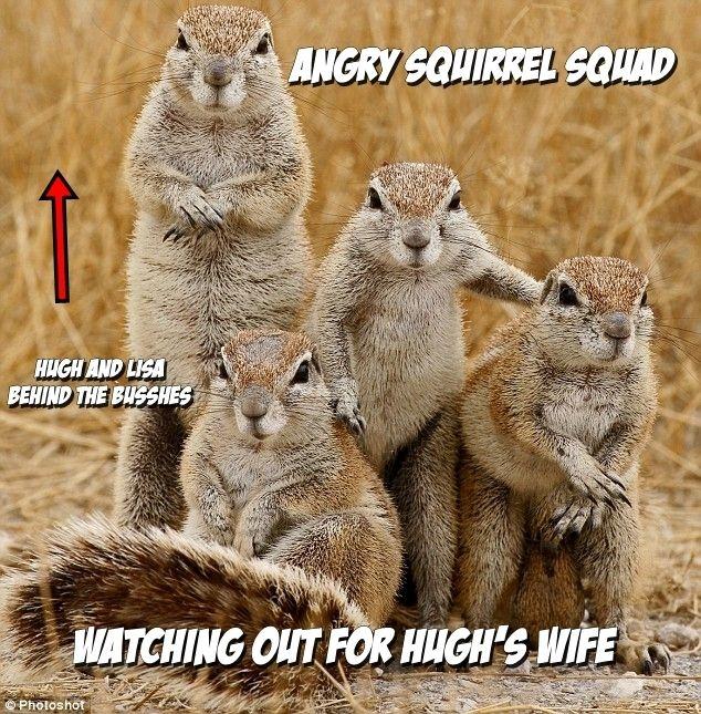 Картинки по запросу angry squirrel Animals wild, Funny