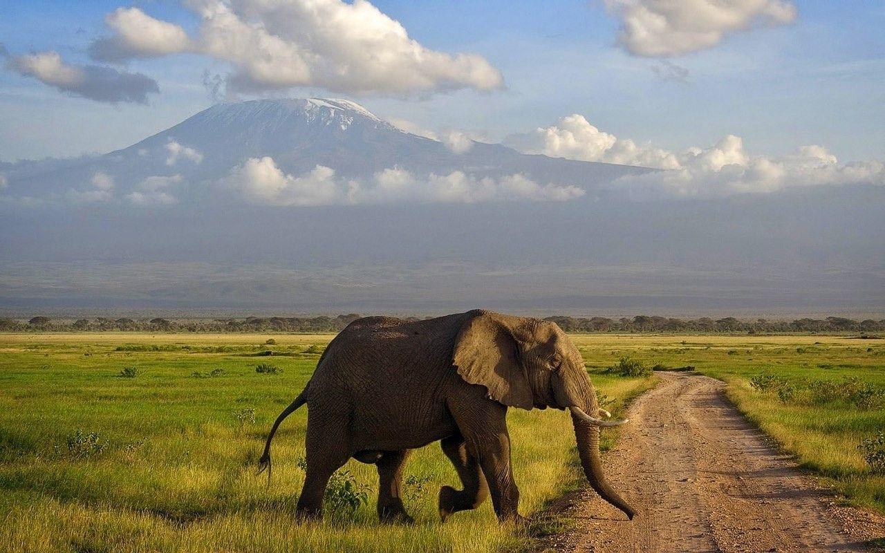 Национальный парк Амбосели, Кения | Слоны, Африканский ...