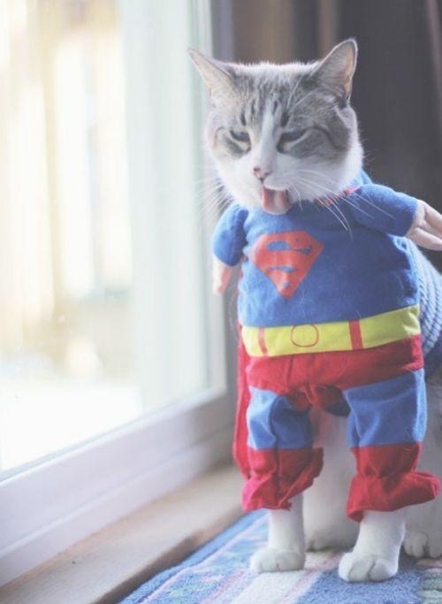 #Superkitty