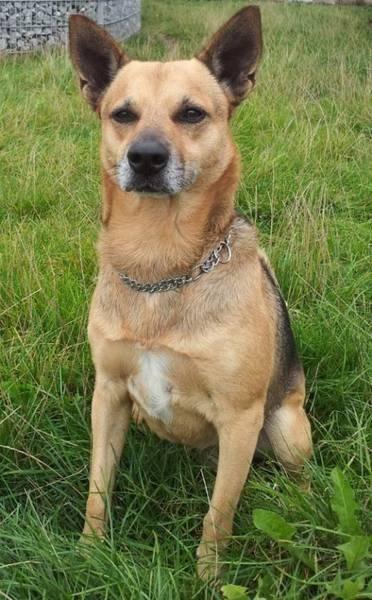 Tobi, ein freundlicher TerrierMix, sucht ein neues